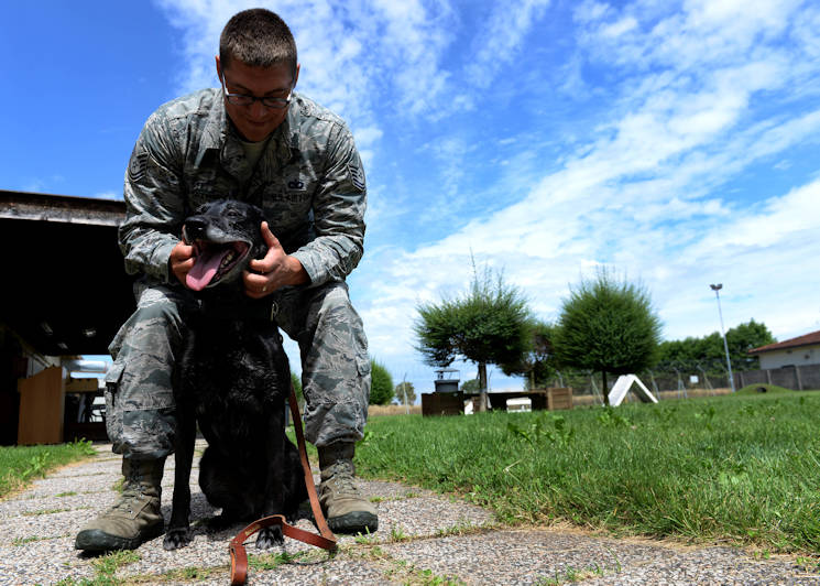 U.S. Air Force Tech Sgt. Gabriel Travers, 31st Security Forces Squadron military working dog handler and Tora, explosives and patrol MWD, finish playing outside in the training grounds, June 23, 2015, at Aviano Air Base, Italy. Tora recently retired and was adopted by her handler's family. (U.S. Air Force photo by Airman 1st Class Cary Smith)