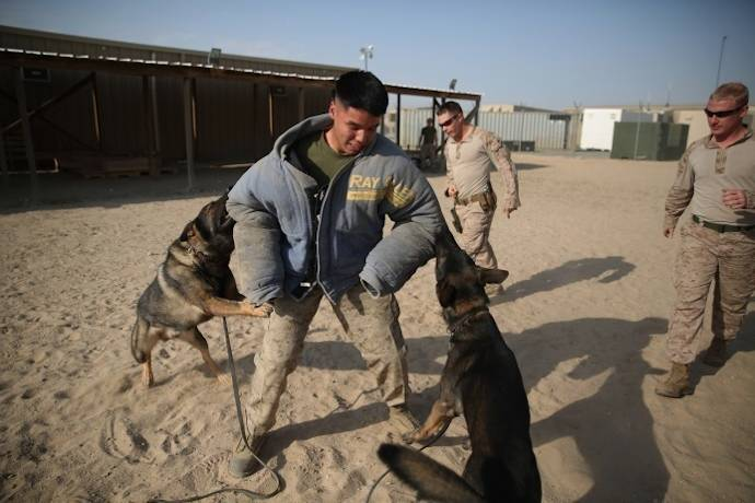 Marine Corps working dogs Max and Akim, from Law Enforcement Detachment, Special Purpose Marine Air Ground Task Force-Crisis Response-Central Command, Command Element, attempt to apprehend a simulated target in the Central Command area of operations, Dec. 28, 2014. The dogs and trainers conducted controlled aggression training, which is designed to teach them to apprehend and restrain a target rather than kill or seriously injure. (U.S. Marine Corps photo by Cpl. Carson Gramley)
