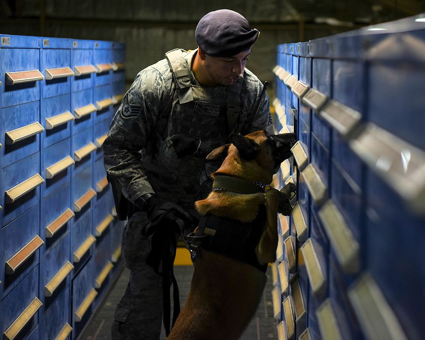 U.S. Air Force Staff Sgt. Dominic Williams, 8th Security Forces Squadron military working dog handler, conducts substance detection training with Ooyvey, 8th SFS MWD, at Kunsan Air Base, Republic of Korea, Nov. 20, 2018. Substance detection training teaches MWDs to seek out and detect explosives, narcotics and other various substances for the protection of U.S. Air Force assets and personnel. (U.S. Air Force photo by Senior Airman Savannah L. Waters)