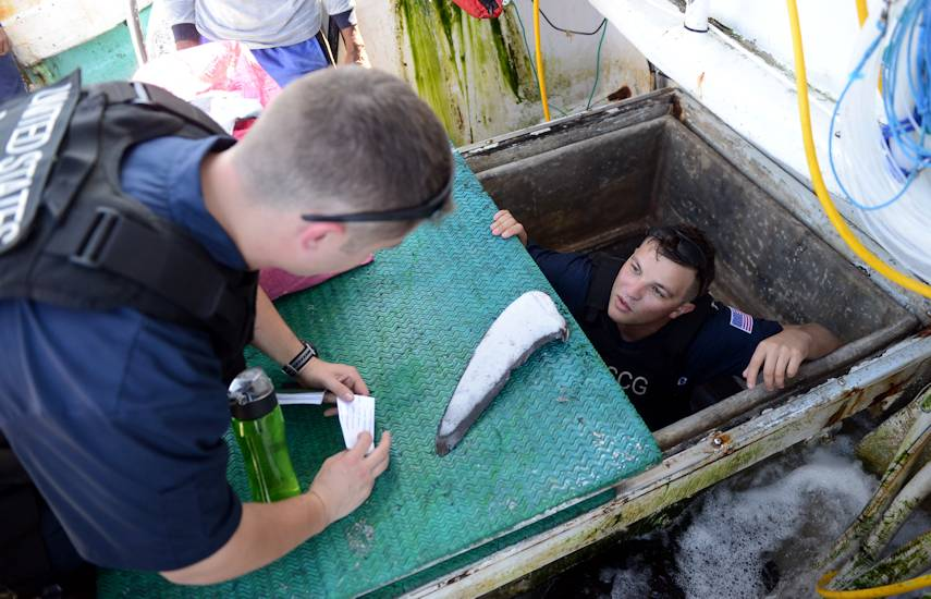 Ens. Victor Broskey, boarding officer, and Seaman Ben Gardner, boarding team member aboard U.S. Coast Guard Cutter Sequoia (WLB 215) find shark fins in a fish hold aboard a foreign fishing vessel in the Western Pacific Ocean, July 28, 2018. Shark fins can not be imported without the associated carcasses which this vessel did have. (U.S. Coast Guard photo by Petty Officer 3rd Class Amanda Levasseur)