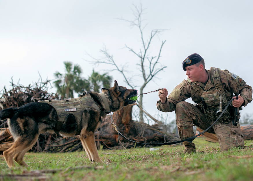 Airman Plays With His MWD - USA Patriotism!