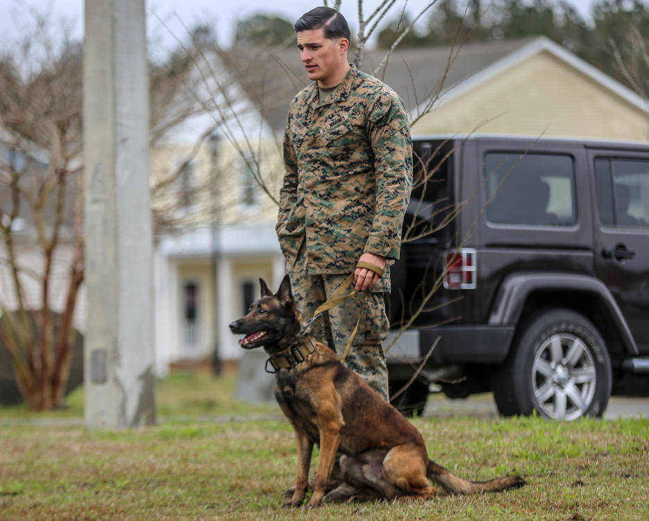 March 21, 2019 - Sgt. Bryce Schmidt, military working dog handler, 2nd Law Enforcement Battalion, gives commands to his military working dog during a controlled aggression exercise on Marine Corps Base Camp Lejeune, North Carolina. This exercise trains military working dogs on how to take down an immediate threat to become more adaptive in a combat environment. (U.S. Marine Corps photo by Lance Cpl. Miranda C. DeKorte)