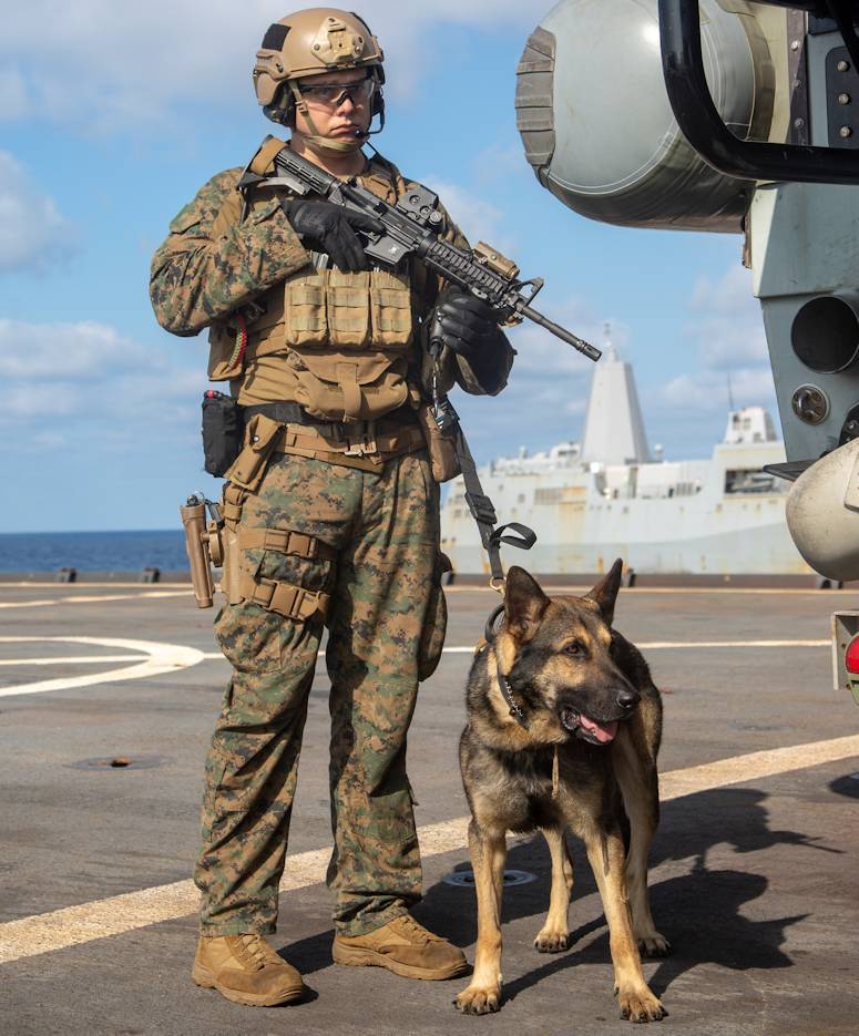 February 4, 2020 - Cpl. Andrew Richter, a military working dog handler, and Jack-Jack, a military working dog, with the 31st Marine Expeditionary Unit's (MEU) Maritime Raid Force provide security for their fellow Marines during a visit, board, search and seizure (VBSS) full mission profile aboard the Whidbey Island-class dock landing ship USS Germantown (LSD 42). (U.S. Marine Corps photo by Lance Cpl. Joshua Sechser)