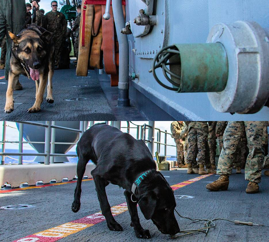 March 22, 2020 - Jack Jack (top) and Allie (bottom), military working dogs with the 31st Marine Expeditionary Unit (MEU), search for explosive materials during an explosive ordnance familiarization class aboard amphibious assault ship USS America (LHA 6). (Image created by USA Patriotism! from U.S. Marine Corps photos by Lance Cpl. Joshua Sechser)