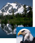 snow covered mountain mirrored in lake and bald eagle