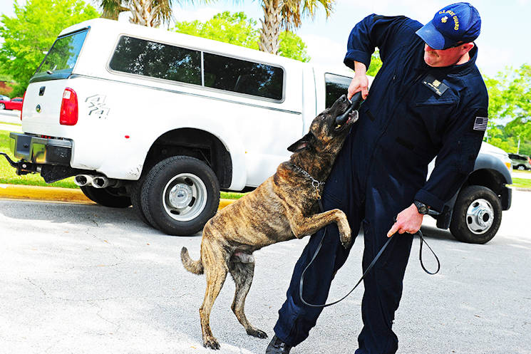 April 25, 2014 - Petty Officer 1st Class Jeffrey Fallon, a Coast Guard K-9 handler, works with his dog during a K-9 demonstration at a luncheon in Kings Bay, Ga., Friday to recognize and celebrate Camden County's official designation as the nation's first Coast Guard Community. Coast Guardsmen from Maritime Force Protection Unit Kings Bay and Maritime Safety and Security Team Kings Bay, the two Coast Guard units in Camden County, provided demonstrations for luncheon attendees. (U.S. Coast Guard photo by Petty Officer 1st Class Lauren Jorgensen)