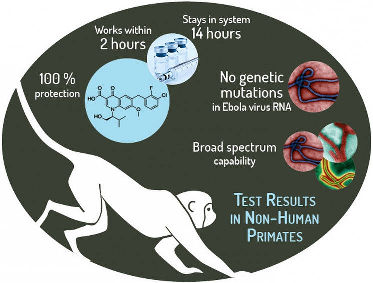 February 7, 2017 - The JSTO-USAMRIID team tested the molecule's effectiveness against a lethal Ebola virus infection in non-human primates. Administering GS-5734 resulted in 100 percent protection, whereas all controlled animals succumbed to the Ebola virus. (Courtesy image by Defense Threat Reduction Agency's Chemical and Biological Technologies Department)