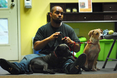 Army Capt. Lawrence Minnis sits with his two adopted pit bulls at the Washington Humane Society's Behavior and Learning Center, Nov. 12, 2009. Minnis met the dogs through the humane society's Dog Tags program, in which soldiers recovering at Walter Reed Army Medical Center sign up to help teach animals housed at the shelter learn how to behave.