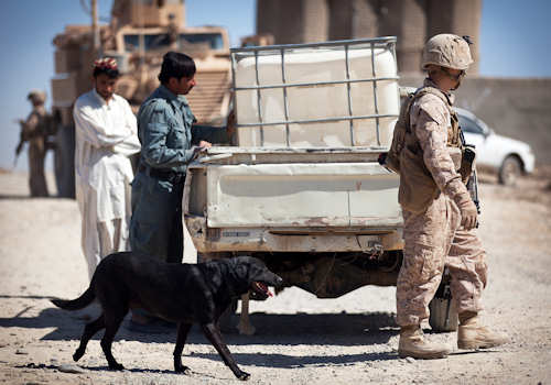 U.S. Marine Lance Cpl. Stuart Ferreri, a dog handler with Guard Force Platoon, 3rd Battalion, 3rd Marine Regiment, and 21-year-old native of Northglenn, Colo., and Fancy, an improvised explosive device detection dog, search the outside of a truck commuting past Checkpoint Drahbiash while Afghan National Police patrolman Dost Mohammad examines the contents of its bed during Operation Gridlock here, March 21, 2012. Photo by USMC Cpl. Reece Lodder
