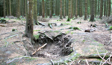 One of the many foxholes in the Ardennes Forest