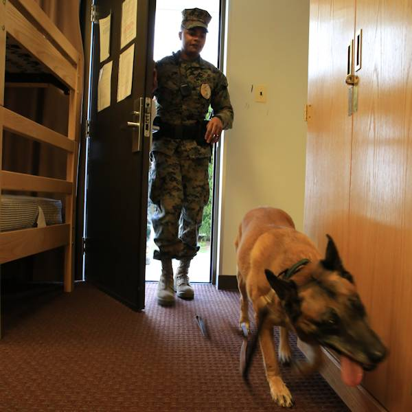 Lance Cpl. DeSean R. White, military working dog handler with Headquarters and Headquarters Squadron follows his dog Azra into a room during a routine training narcotics search exercise. The search took place inside an empty barracks room aboard Marine Corps Air Station Iwakuni, Japan, Jan. 16, 2014. Azra is a narcotics specialist dog and trains regularly to sustain and improve her sense of smell and trust with her handler. (U.S. Marine Corps photo by Lance Cpl. David Walters)